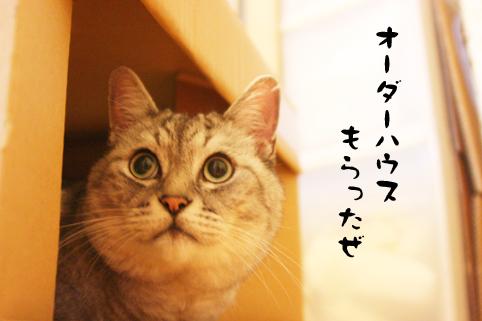 100609_1.jpg