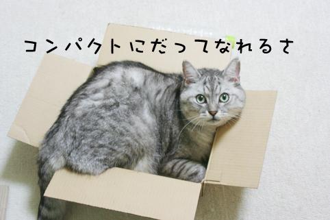 110907_2.jpg