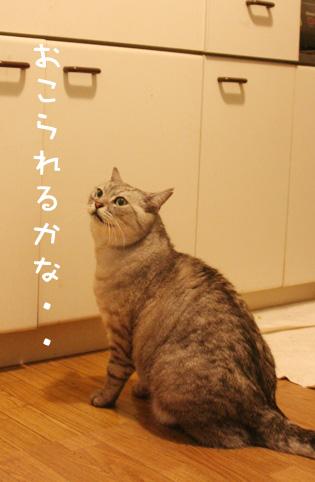 20121123_3.jpg