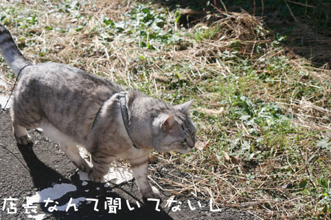20121127_4.jpg