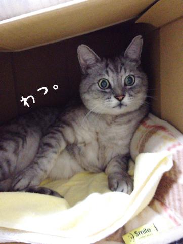 20121129_8.jpg