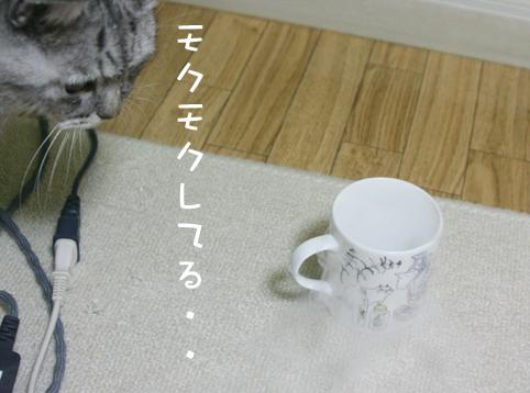 20130214_1.jpg