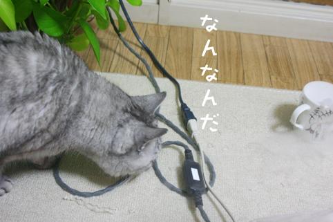 20130214_3.jpg