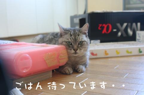 20130514_1.jpg