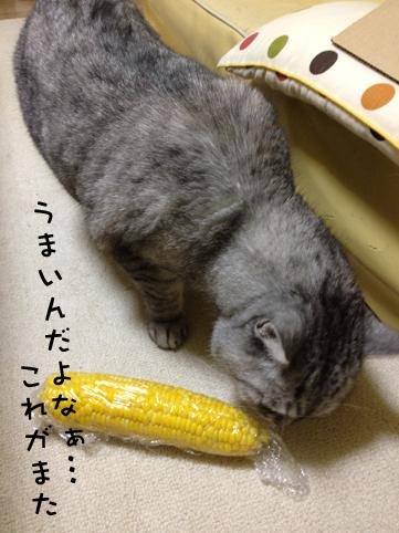 20130703_2.jpg