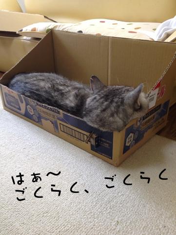 20130722_4.jpg