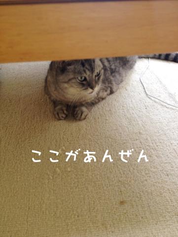 飼い猫志願 ネコ雑貨ネコゾンズhttp://nekozon.com