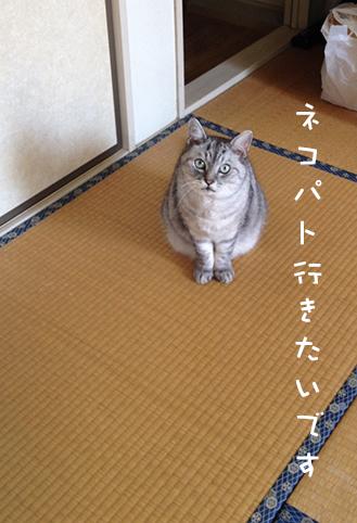 20140701_3.jpg