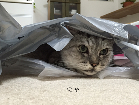 飼い猫志願