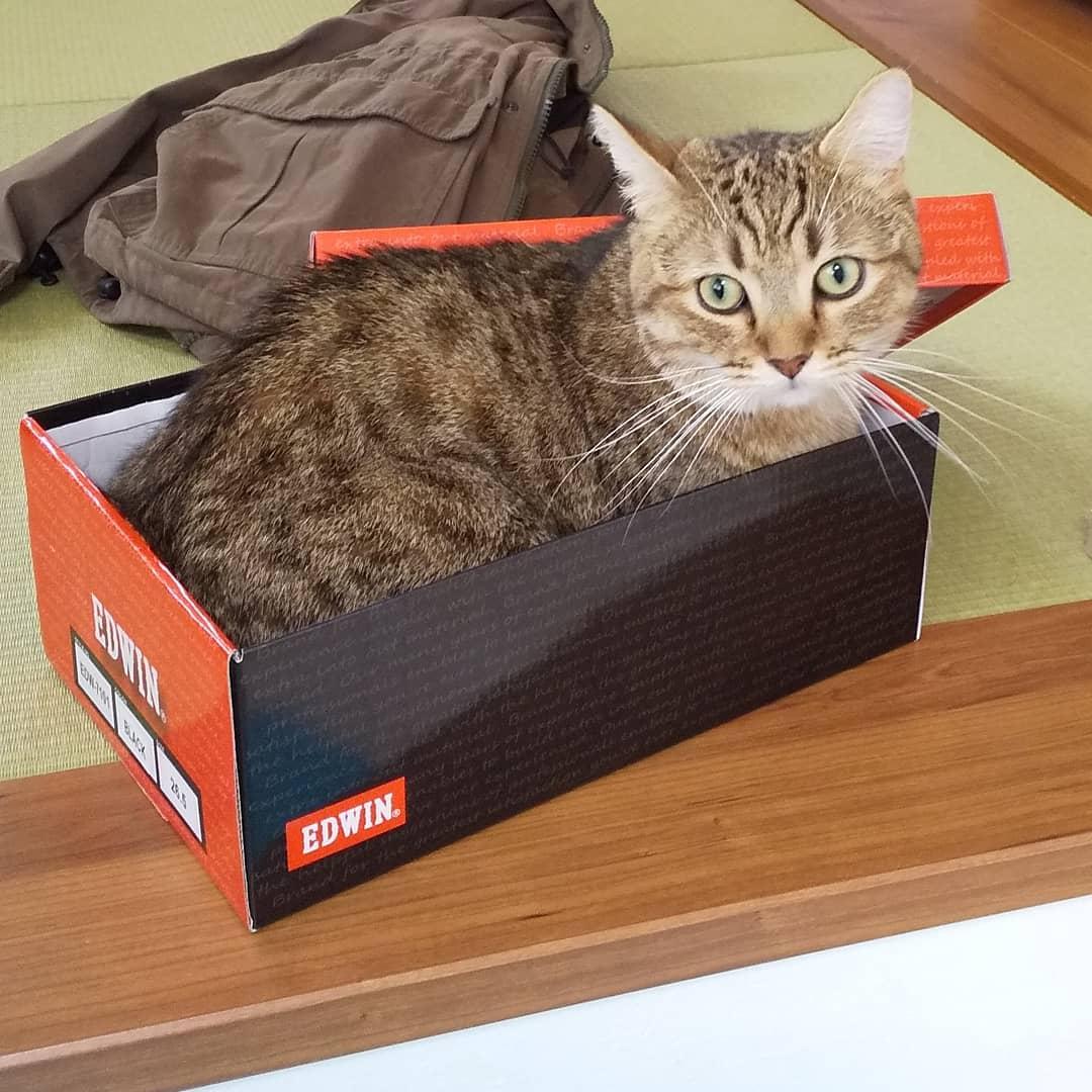 「箱を見つけました。僕の箱だよ!」最後の2枚の画像は、頭なでられてうっとりタビちゃん。..