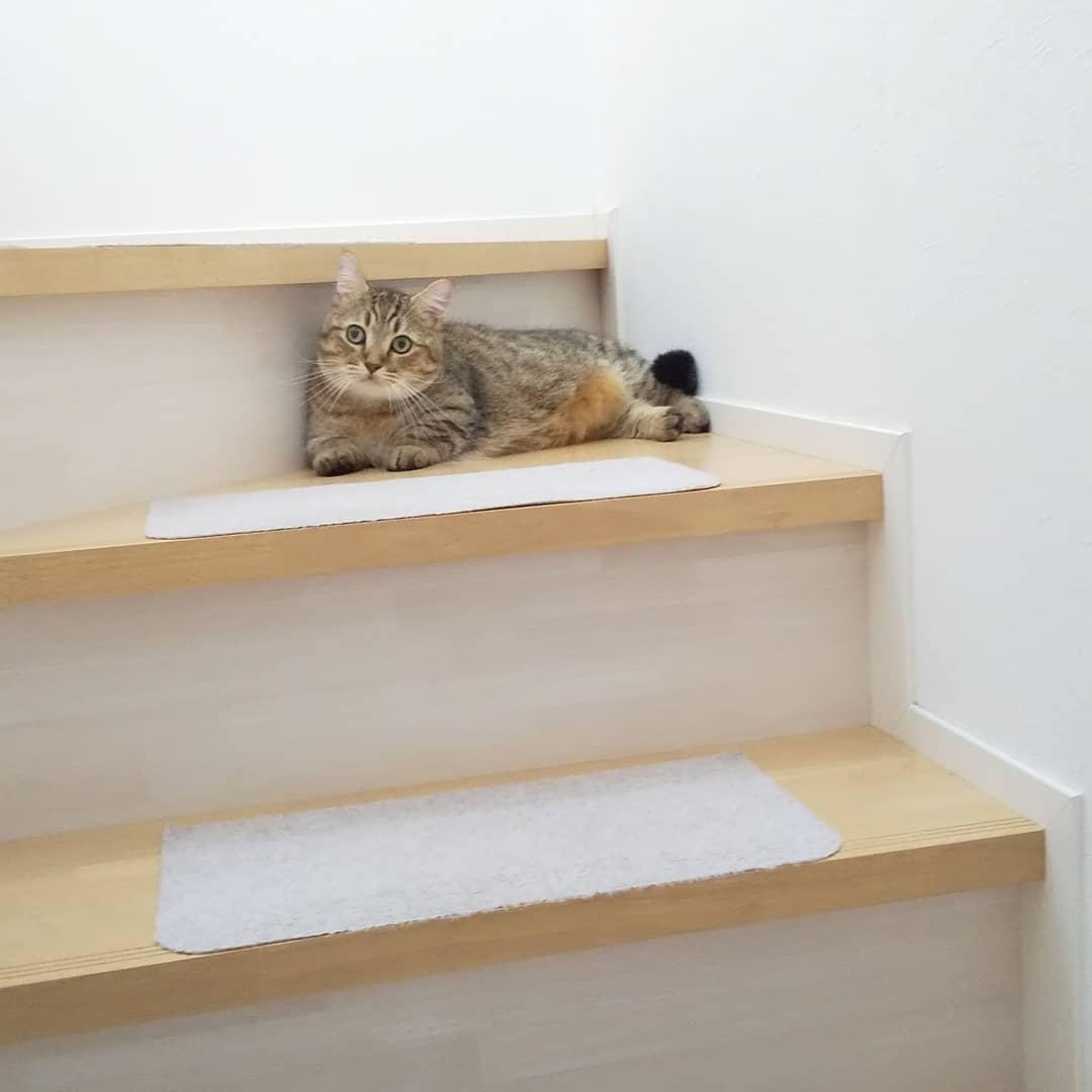 階段の途中のタビ、「ここを通るなら最低カリカリ、できればチュール」と言われてる気がする…うちでは、いたる所で通行料がかかるらしい。..