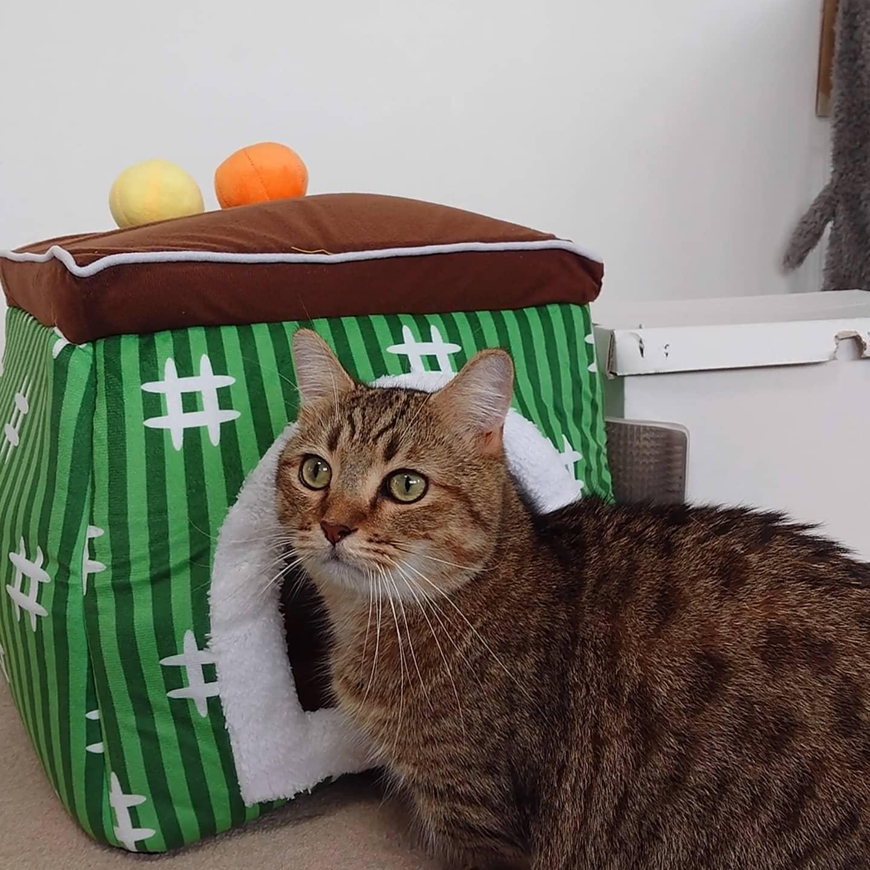 寒くなってきたので、タビに猫ハウス進呈。ちゃんと使ってくれるかなぁ…。動画は最初に猫ハウスを見せた時。..