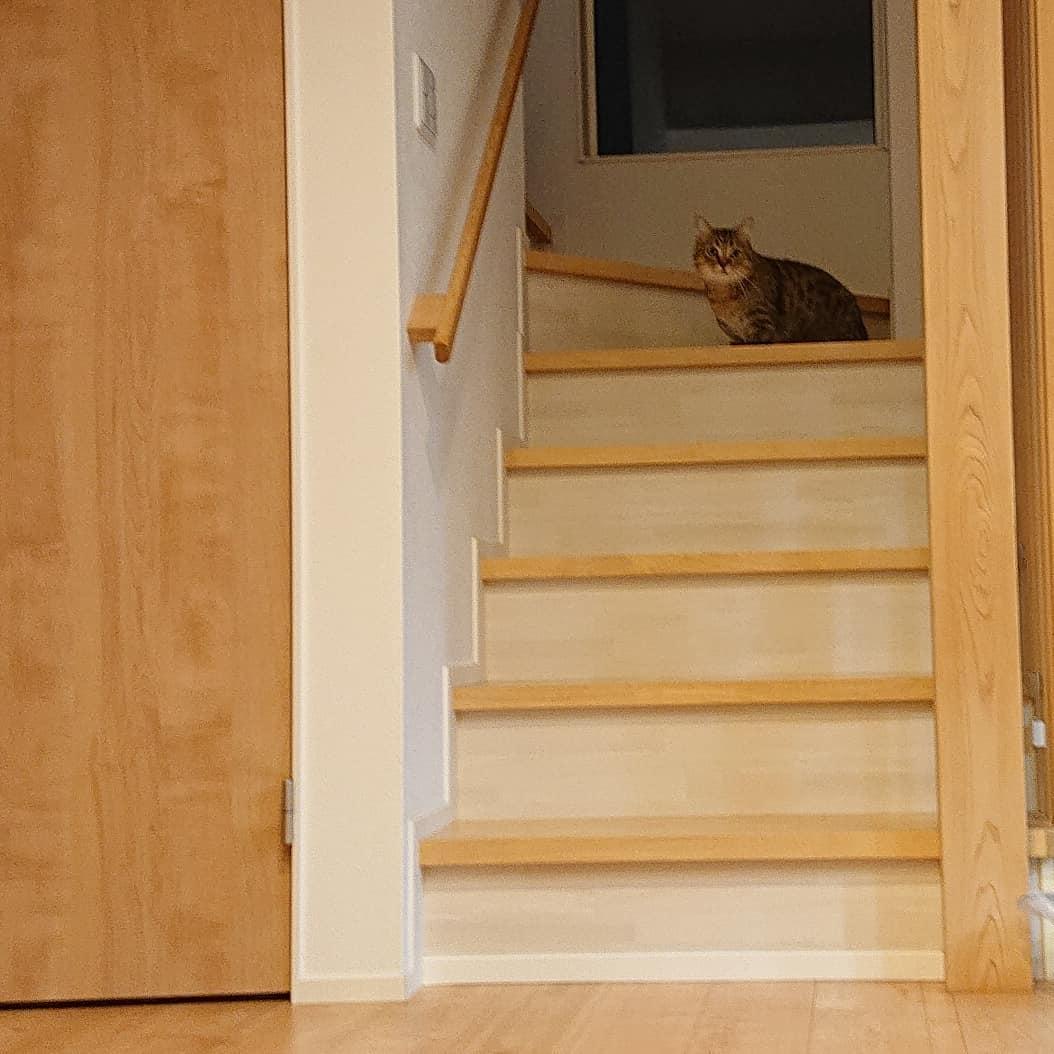 玄関に置いたはじめて見る自転車を警戒して、しばらく階段を降りて来ないタビ。でも、気になるので、勇気を出してゆっくりと近づいて来た。猫チェックをはいりました♪猫チェック半端ない(笑)..
