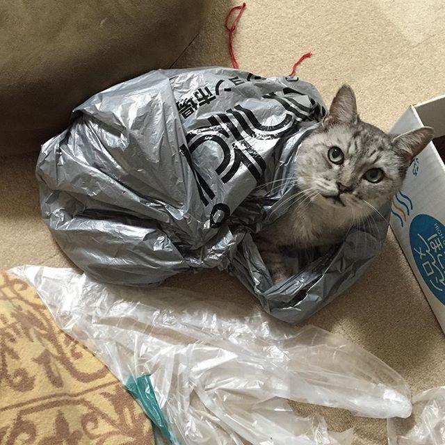 個室ニャ#ねこ  #猫  #飼い猫志願  #cat #お気に入り