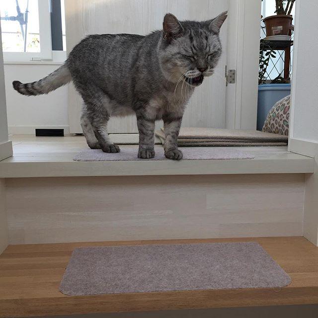 ごはんの時間なのにゃ〜#cat #飼い猫志願 #猫 #ねこ