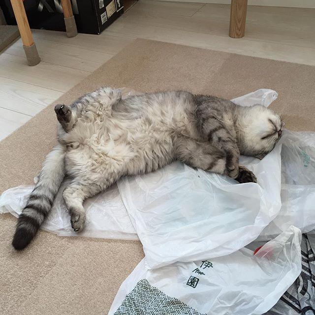 午後のお昼寝♪#cat #飼い猫志願 #猫 #ねこ #昼寝