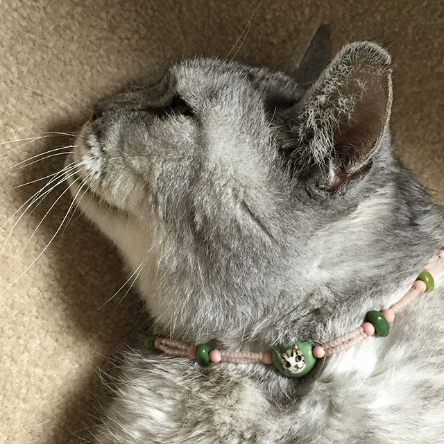 谷中のギャラリー猫町で開催されている沼田先生の個展で購入した可愛すぎる猫柄のトンボ玉ブレスレット(^-^)しまさんの首は太すぎて回らないのでそっと置いてみました(笑)#ねこ #ネコ #cat #猫 #トンボ玉