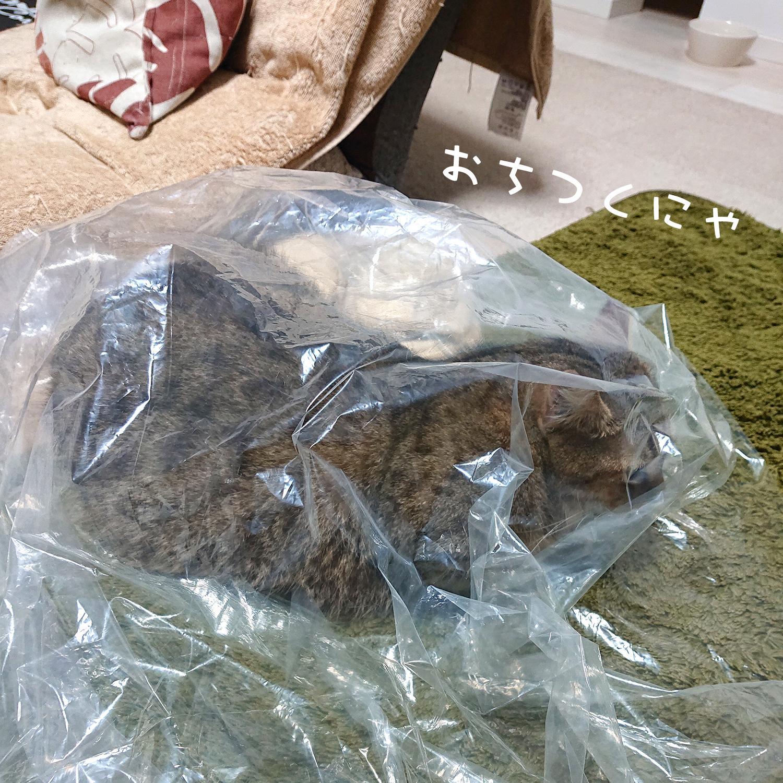 飼い猫志願 袋が好き