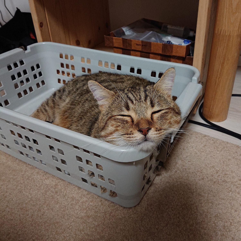 飼い猫志願 タビ