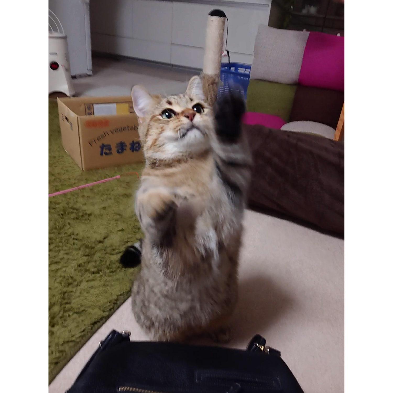 飼い猫志願タビ