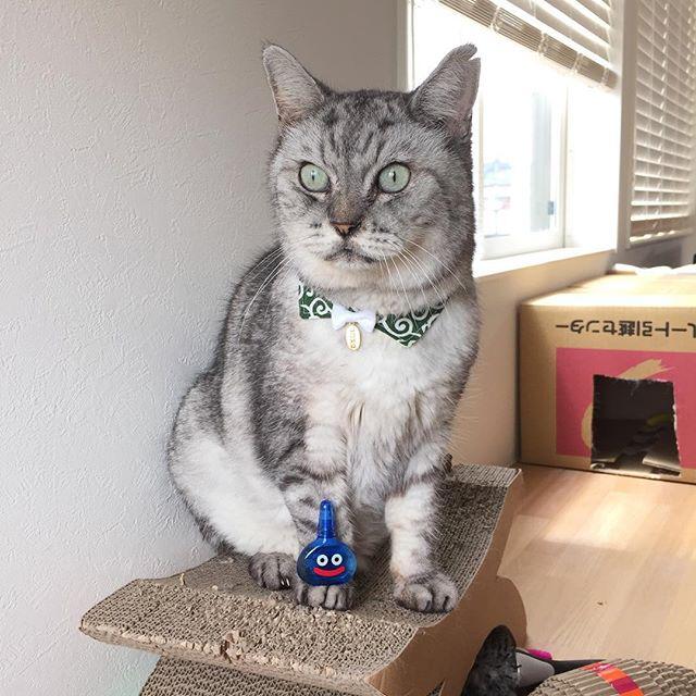 ピュルルルルーしましまとスライムが現れた!#ねこ #cat #スライム目薬