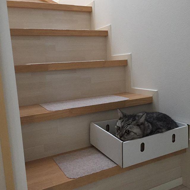 ベランダで、しまの箱を干そうと置いておいたら…。 #猫 #ネコ #ねこ #cat