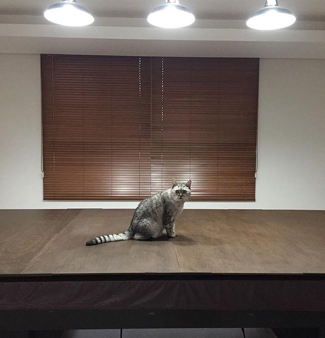 しまさんがピョンと台に上がり、ダンナがパッとライトをつけた。なんかはじまるんだろうか…しまさん劇場…#ねこ #cat #ネコ #猫