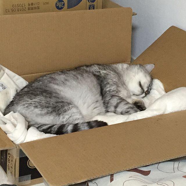 幸せそうな顔して眠ってるモフモフ毛布はもう完全にしまさんの私物化(笑)#cat #猫 #ねこ #catstagram #ネコ