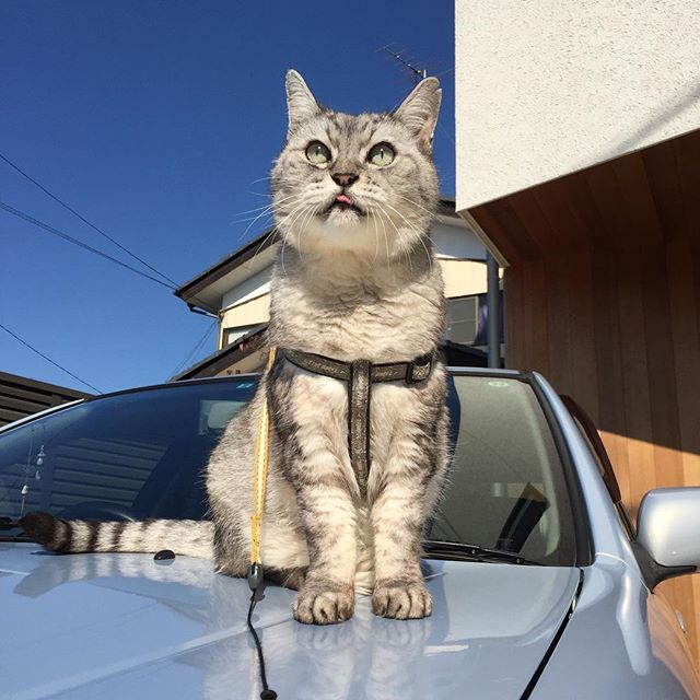 気持ちいい天気だにゃー#catstagram #cat #にゃんすたぐらむ #猫
