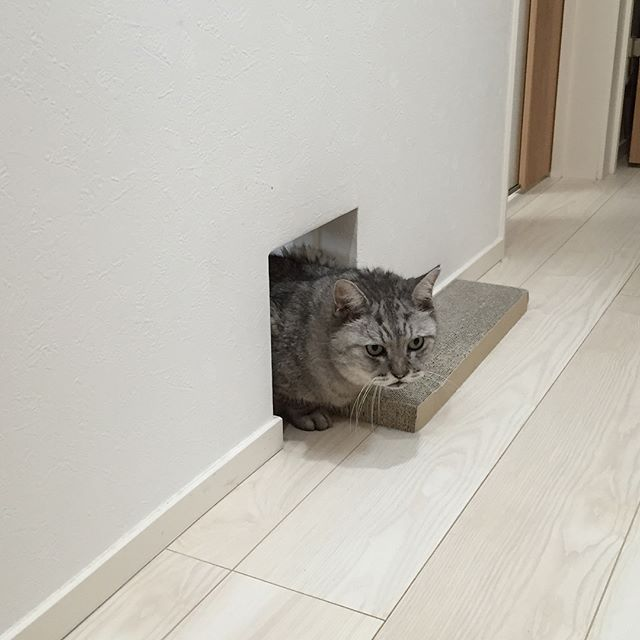 リビングへ入る際の検問。#cat #beautyplus #猫 #にゃんすたぐらむ