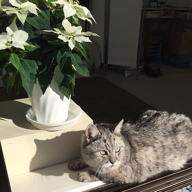 今日はお花と一緒にお日向ぼっこにゃ♩#cat #catstagram #猫 #ねこ #にゃんすたぐらむ