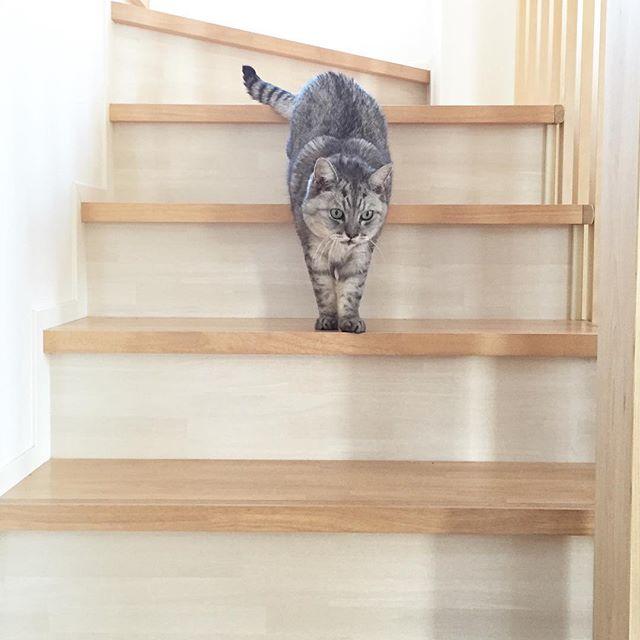 天気もいいしネコパトに行くにゃ!#cat #catstagram #ネコ #ねこ