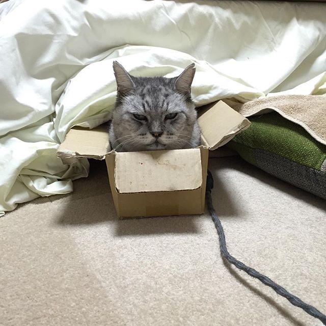 ただいま、こたつに入ってます♩ブログ更新しました。→「飼い猫志願」#cat #catstagram #猫 #ねこ部