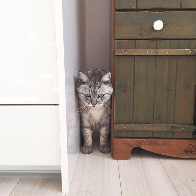 狭いとこ好き♩#猫 #cat #catstagram #にゃんすたぐらむ