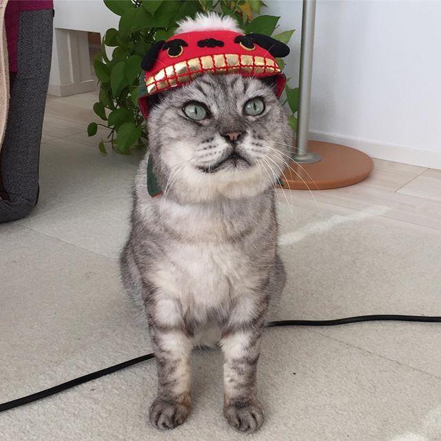 あけましておめでとうございますニャ(^-^)/今年もよろしくお願いします♩#catstagram #cat #猫 #獅子舞