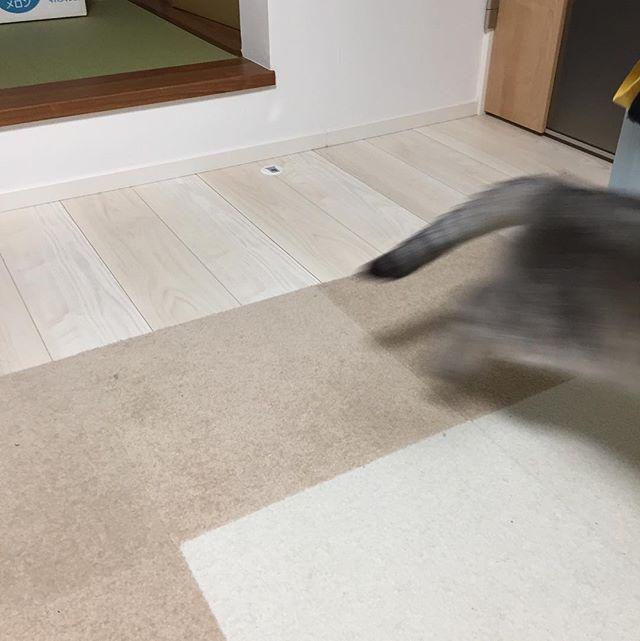 写真を撮ろうとしたら、逃げられた…フレームアウト…#cat #猫 #catstagram #にゃんすたぐらむ