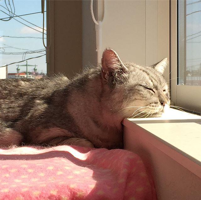 今日もひなたぼっこしながら、うとうと(^-^) #catstagram #tabbycat #cat #猫 #にゃんすたぐらむ #ひなたぼっこ