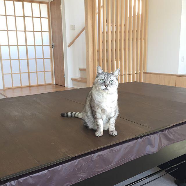 今日は風が強かったので、ネコパトをしようと思ったけど、窓からのパトロールになりました。にゃー。#cat #catstagram #tabbycat #猫 #にゃんすたぐらむ