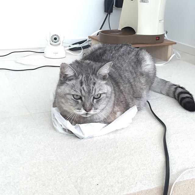 このカサカサ感がたまらないのニャ#catstagram #tabbycat #cat #猫 #にゃんすたぐらむ