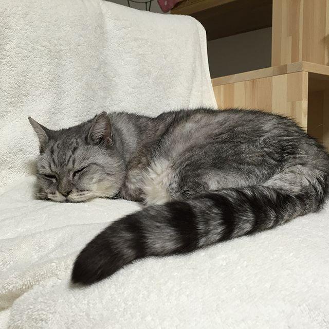 今日は、天気も良かったので朝から、茨城県内桜旅留守番しまさんはちょっといじけ気味…。 写真は、りんりんロード雨引給水所、常陸国出雲大社、羽田山薬王寺。とても綺麗でした(^-^) #りんりんロード #常陸国出雲大社 #羽田山 #cat #cherryblossom #sakura #tabbycat