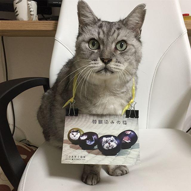「オレ、とんぼ玉になったにゃ。」トンボ玉作家沼田恵美子先生のトンボ玉にしまさんが登場!東京の谷中ギャラリー猫町で個展が開催されますいつみても素晴らしい猫をモチーフにしたトンボ玉に今回はしまさんもそして、しまさんは営業部長も仰せつかりました2018.5.24〜6.3まで。5/28〜30は休廊です。ぜひぜひ伺ってみてくださいステキな沼田先生とステキなトンボ玉達に出会えます私もお伺いする予定です#トンボ玉 #猫町 #ランプワーク #猫 #ねこ #ガラス #谷中