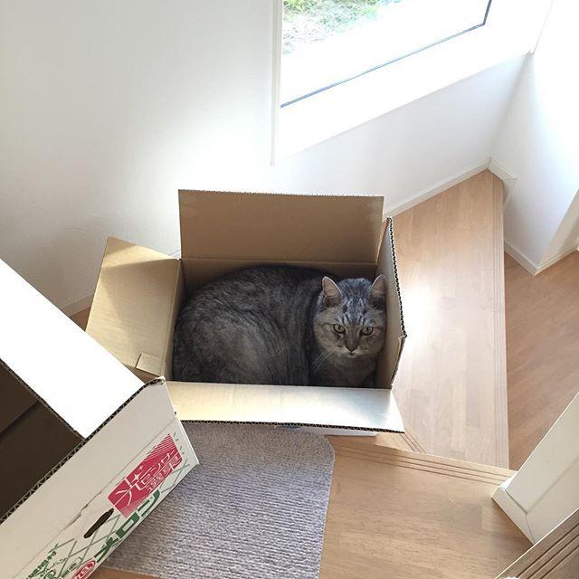 ダンボールの空き箱を捨てようと、階段を降りていて、忘れ物を思い出し、途中で箱を置いて二階に戻った。そして再び階段に戻ったらこの状態…。しま…。