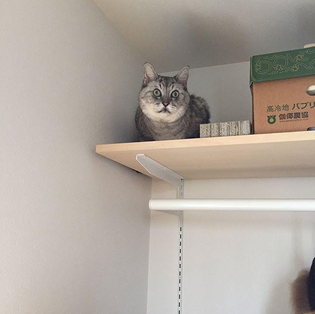 またそんなとこに…#tabbycat #cat #猫 #にゃんすたぐらむ