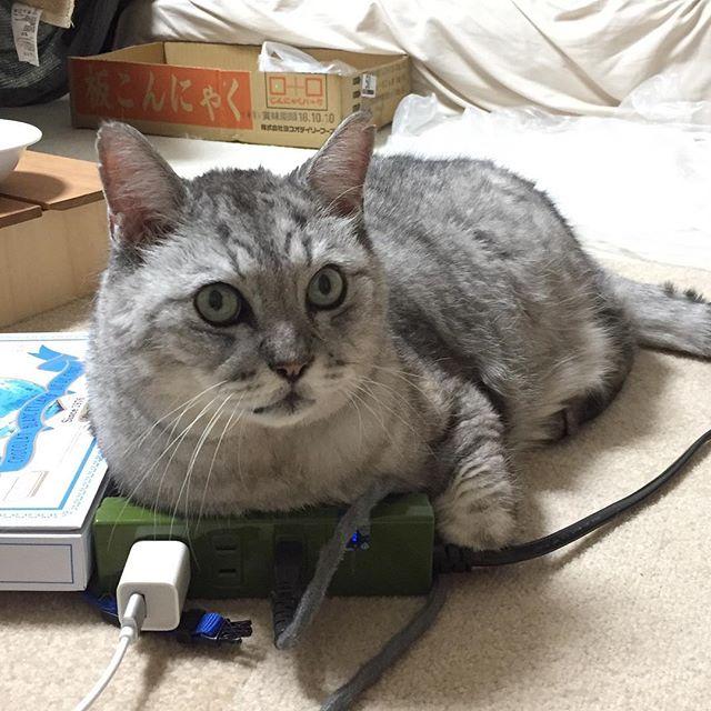 で、オレといつあそぶにゃか?#cat #猫