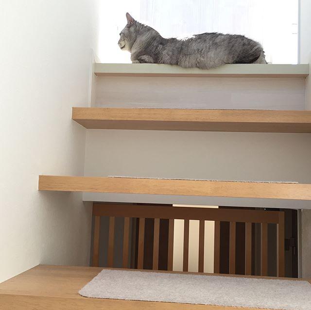 今日はどうもうちの階段は一段多いらしい…。 #階段 #cat #猫 #にゃんすたぐらむ #catstagram
