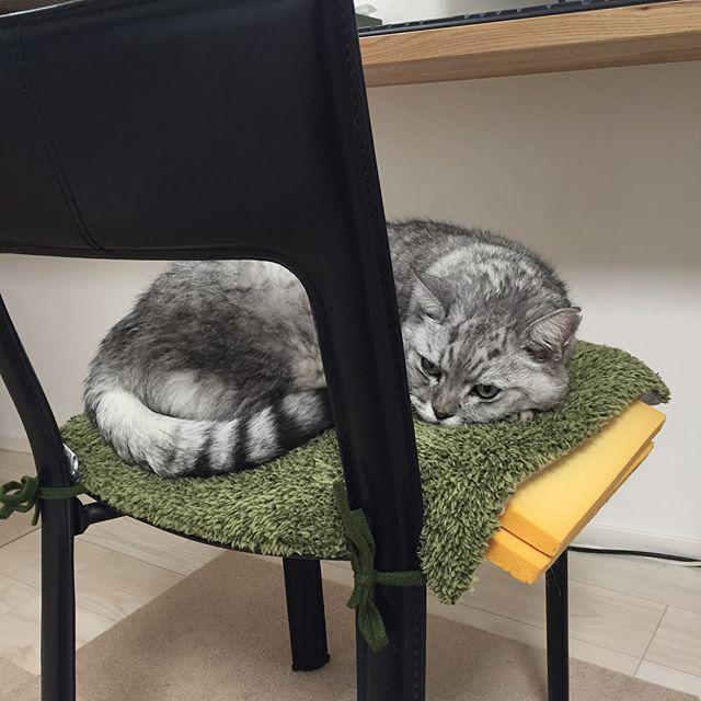イスを乗っ取られました…。代わりに仕事してくれるのかな2枚目・3枚目…昨日作ったお花のトンボ玉。花いっぱいの #トンボ玉 がお気に入り#catstagram #cat #猫 #にゃんすたぐらむ #トンボ玉 #ランプワーク #ガラス #とんぼ玉 #かんざし