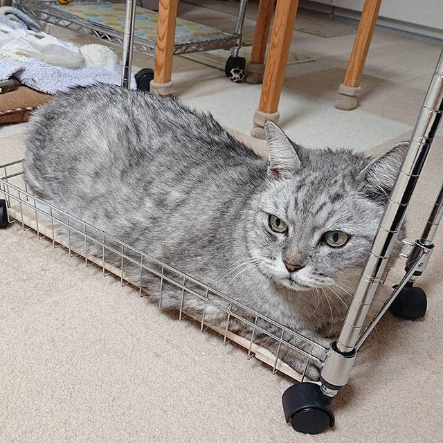 久しぶりにブログ更新しました 飼い猫志願..ブログはインスタプロフィール一番下のURLから。.#にゃんすたぐらむ #猫 #catstagram #cat