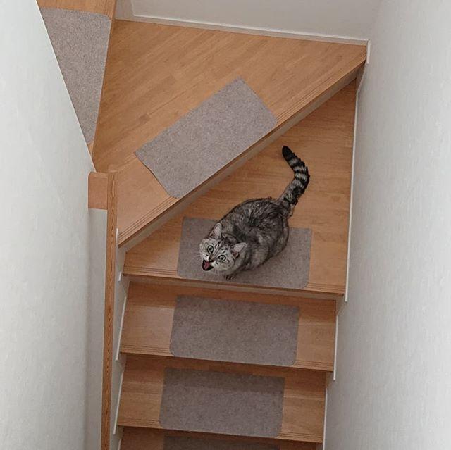 なんかにゃーにゃー言いながら、一匹で降りて行ってしまいました。忙しそうだな…しま(笑)...#猫の日 #猫 #catstagram #cat #にゃんすたぐらむ