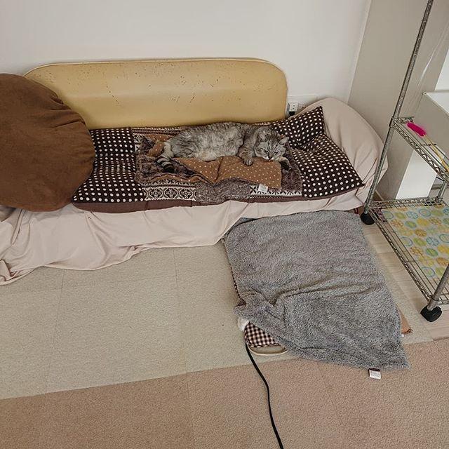 しまさん専用ソファで、まったりお昼寝しまさん。人間用のソファは無し(笑)・・#catstagram #cat #猫 #にゃんすたぐらむ