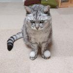 1枚目:ん?2枚目:なんかのった3枚目:なに?4枚目:チッ自前の毛玉ボールです#catstagram #cat #猫 #にゃんすたぐらむ
